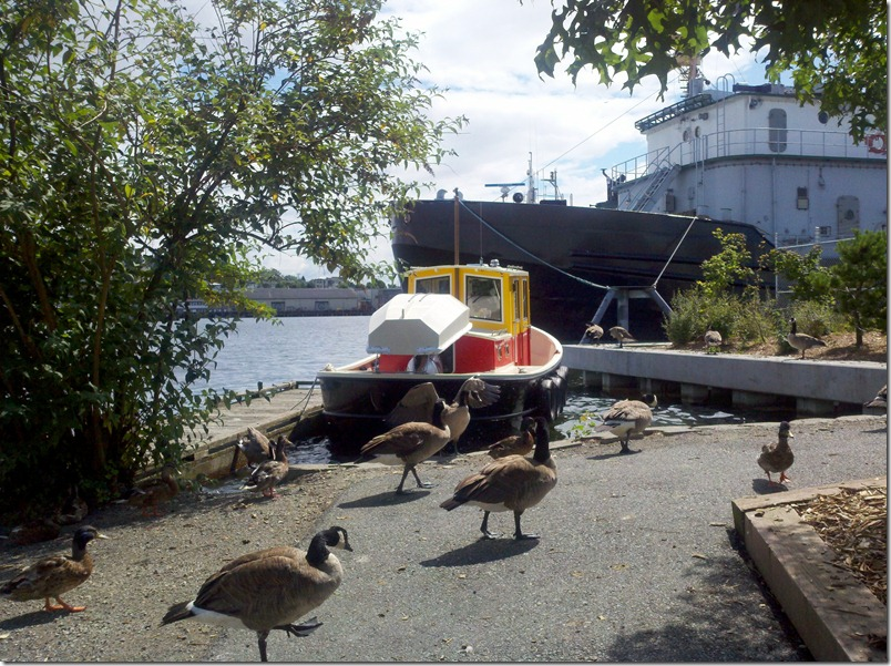 Coot boat in Ballard